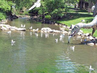 Dinasaur Park
