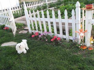 Maggie in the garden