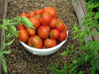 bowl full of beauties