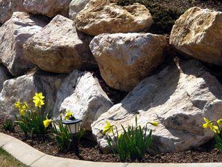 Daffodilsrocks