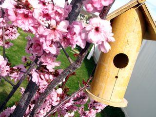 Birdhouseplum3