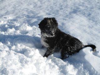 Snowdogmaisey