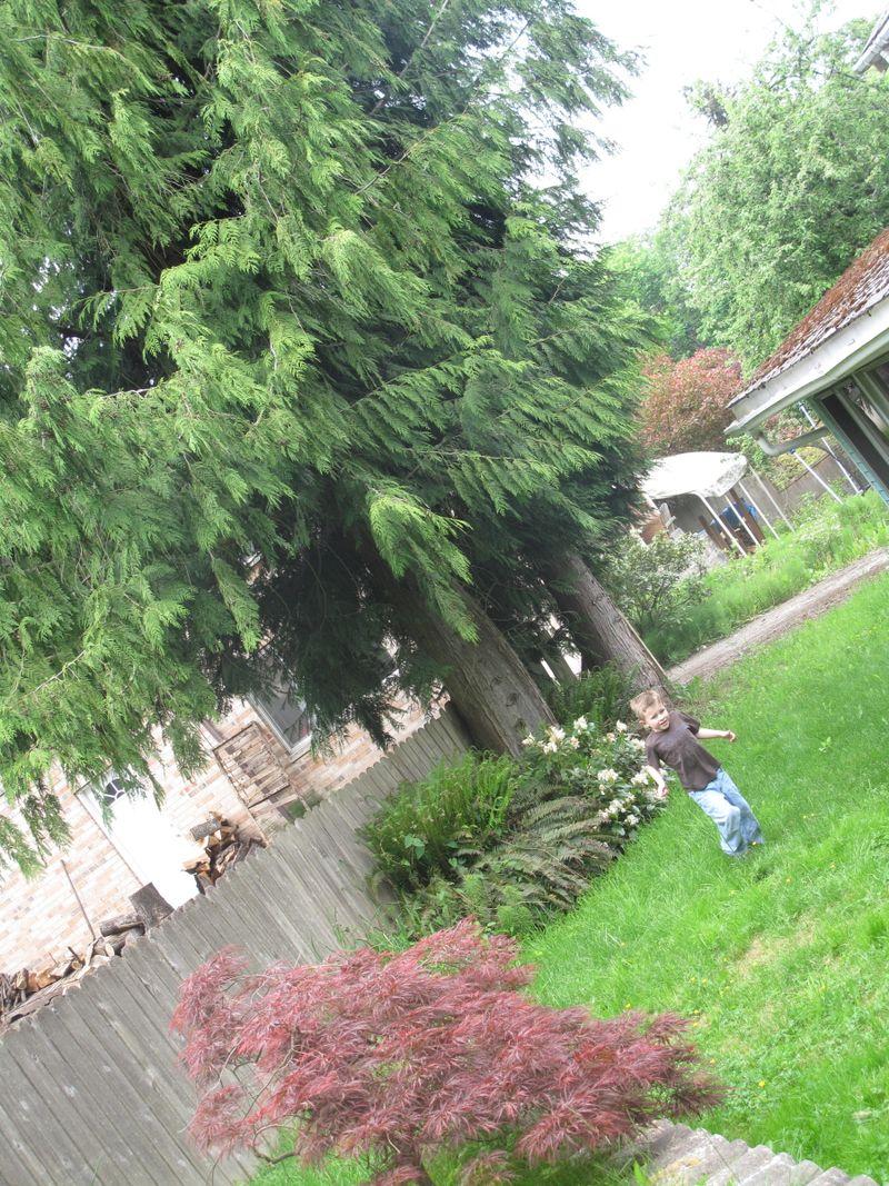 Cottagebackyard