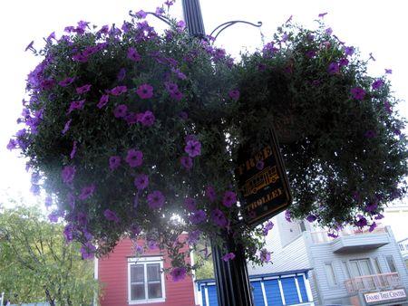 Parkcityflowers