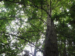Woodlandzootree