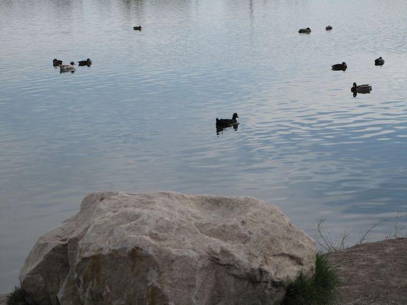 Birdswim