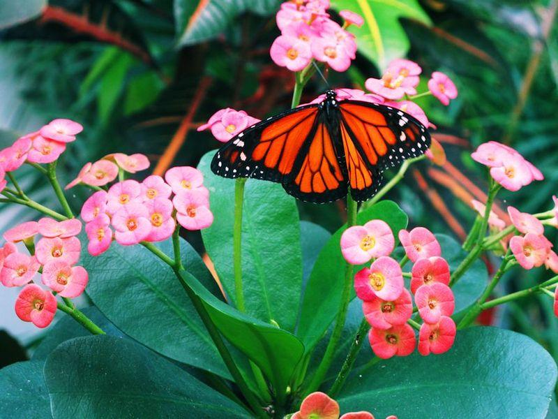 Butterflytm